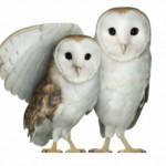 TELUS tackles online exploitation with TELUS WISE