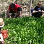 Foraging for Edible Wilds with Kids