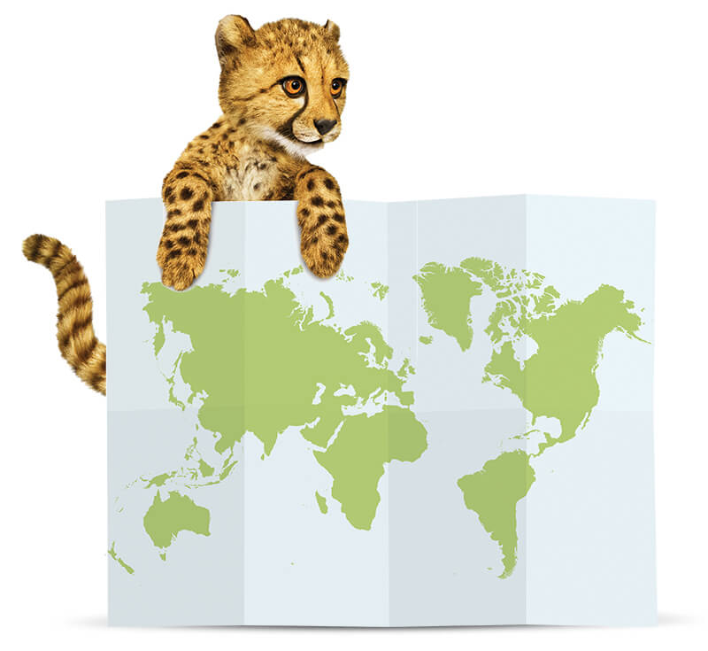 cheetah-with-international-map