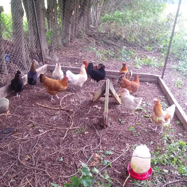 hen house 3
