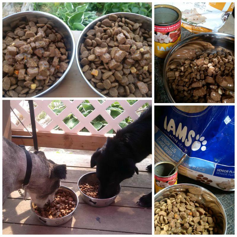mixed feeding iams