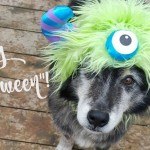 Halloween Hounds: Milk-Bone Study Shows Dogs Are Ultimate Trick-or-Treaters
