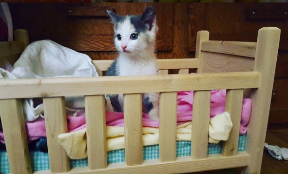 kitten in crib