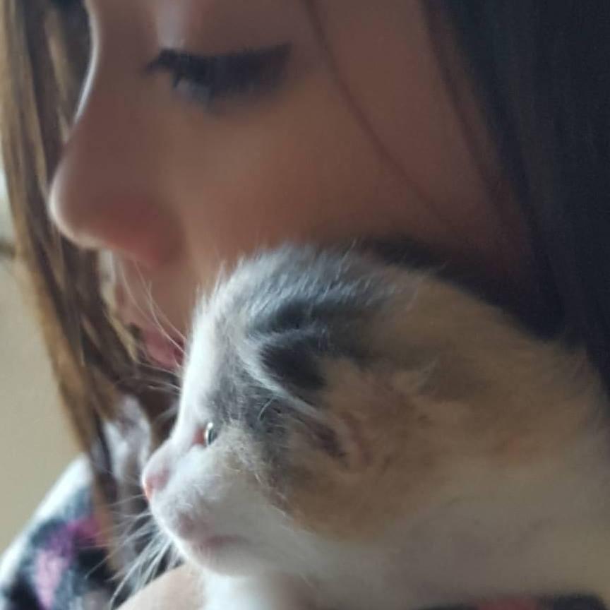 keeping kitten entertained 1