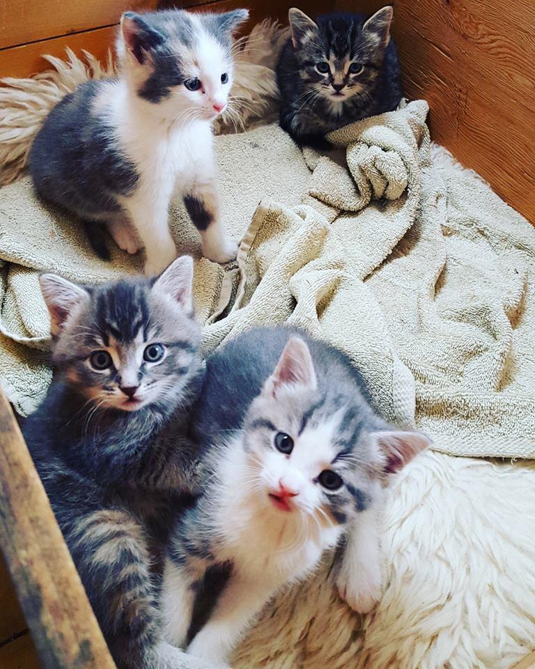 keeping kitten entertained