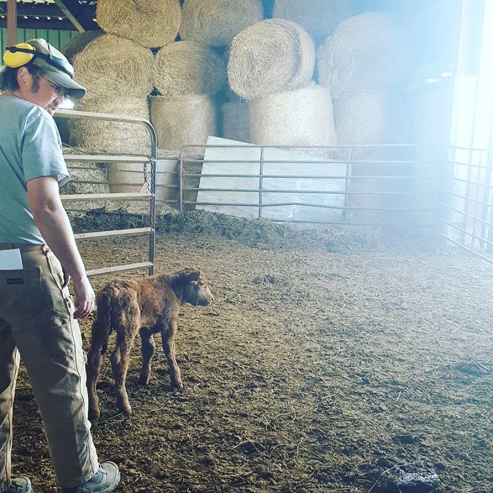 calving season 2