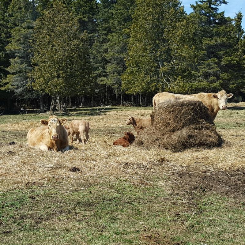 calving season 3
