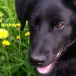 How to Keep your Dog's Teeth Healthy + a Purina #DentaLifeSmile Twitter Party