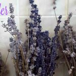 The Fresh Scent of Lavender