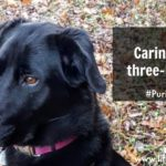 Purina Beneful & Caring for our Three-Legged Dog  #PurinaPetPeople