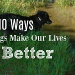 10 Ways Dogs Make Our Lives Better
