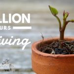 Million Hours of Giving #TeamTELUS #MillionHours