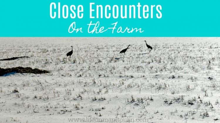 Close Encounters on the Farm