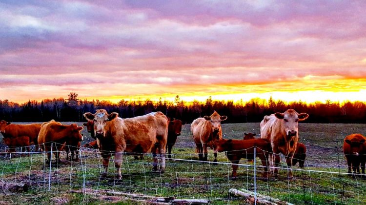 Incorporating Sustainable Products Into Your Life ~ From Farm, Home, & Beyond
