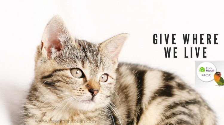 We Give Where We Live: Helping our Furry Friends #TeamTELUS #GiveWhereWeLive